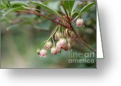 Floral Greeting Cards - Fairy Bells Greeting Card by Lynn-Marie Gildersleeve
