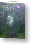 Misty Prints Prints Greeting Cards - Fairy Path Greeting Card by Rob Travis
