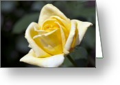 Designers Choice Photo Greeting Cards - Fairy Tale Rose Greeting Card by Don  Wright