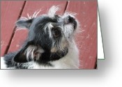 Kauai Dog Greeting Cards - Faith Greeting Card by Mary Deal