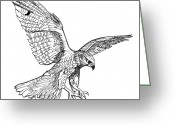 Falcon Drawings Greeting Cards - Falcon Greeting Card by David Burkart