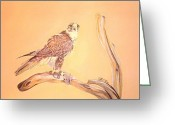 Falcon Drawings Greeting Cards - Falcon Greeting Card by Jeff Moore