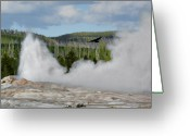 Fumarole Greeting Cards - Falcon over Old Faithful - Geyser Yellowstone National Park WY USA Greeting Card by Christine Till