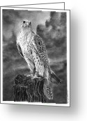 Falcon Drawings Greeting Cards - Falcon Greeting Card by Ronny Hart