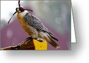 Renaissance Festival Greeting Cards - Falconry 2 Greeting Card by Scott Hovind