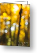 Outdoor Canopy Greeting Cards - Fall abstract Greeting Card by Elena Elisseeva