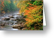 Trout Stream Greeting Cards - Fall along the Cranberry River Greeting Card by Thomas R Fletcher