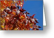Red Autumn Trees Greeting Cards - Fall Art prints Colorful Autumn Leaves Blue Sky Greeting Card by Baslee Troutman Fine Art Prints