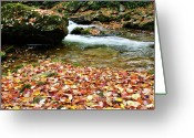 Trout Stream Greeting Cards - Fall Color Rushing Stream Greeting Card by Thomas R Fletcher