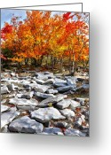 West Virginia Highlands Greeting Cards - Fall Color Trees and Rocks - West Virginia Greeting Card by Dan Carmichael