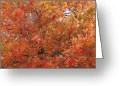 Photograpg Greeting Cards - Fall Colors Greeting Card by David Glotfelty