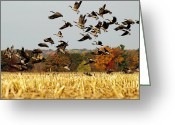 Migration Greeting Cards - Fall Feast Greeting Card by Thomas Young