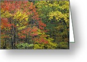 Fishers Greeting Cards - Fall Foliage At Fishers Gap Shenandoah Greeting Card by Tim Fitzharris