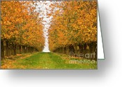Sunbathing Trees Greeting Cards - Fall Foliage Greeting Card by Heiko Koehrer-Wagner