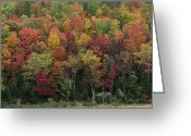 Changing Colors Greeting Cards - Fall Foliage in the Adirondack Mountains - New York Greeting Card by Brendan Reals