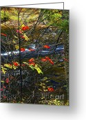 Bank Photo Greeting Cards - Fall forest and river Greeting Card by Elena Elisseeva