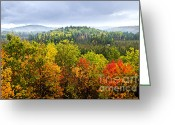 Above Greeting Cards - Fall forest Greeting Card by Elena Elisseeva