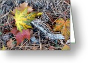 Forest Floor Photo Greeting Cards - Fall Forest Floor Greeting Card by Will Borden