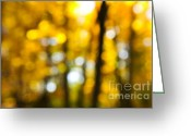Outdoor Canopy Greeting Cards - Fall forest in sunshine Greeting Card by Elena Elisseeva