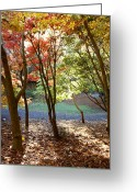 October Greeting Cards - Fall forest Greeting Card by Les Cunliffe