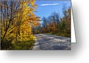 Red Autumn Trees Greeting Cards - Fall forest road Greeting Card by Elena Elisseeva