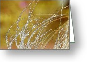 Splash Greeting Cards - Fall Grass Greeting Card by Laura Wrede