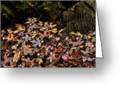 Tans Greeting Cards - Fall in August Greeting Card by Kelley King