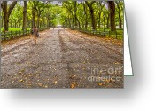 C Casch Greeting Cards - Fall In Central Park Greeting Card by C Casch