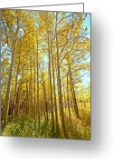 Colorado Greeting Cards Greeting Cards - Fall in St Varin Co Greeting Card by James Steele
