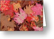 U.s. National Forest Greeting Cards - Fall Leaf Pattern Close-up, Eastern Greeting Card by Gerry Ellis