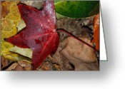 Fall Photographs Greeting Cards - Fall Leaves 2 Greeting Card by Skip Willits