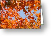Red Autumn Trees Greeting Cards - Fall Leaves art prints Autumn Red Orange Leaves Blue Sky Greeting Card by Baslee Troutman Fine Art Prints