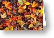 Fallen Leaf Greeting Cards - Fall leaves background Greeting Card by Elena Elisseeva