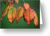 Plants Greeting Cards - Fall Leaves Greeting Card by Kimberly Gonzales