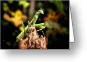 Scary Surreal Fantasy Art Greeting Cards - Fall Mantis Greeting Card by Karen M Scovill