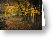 Split Rail Fence Greeting Cards - Fall Maple Leaf Trees with Split Rail Fence Greeting Card by Randall Nyhof