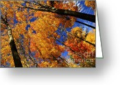 Warm Greeting Cards - Fall maple treetops Greeting Card by Elena Elisseeva