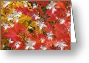 Twinkle Greeting Cards - Fall Of Color Greeting Card by Debra     Vatalaro
