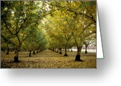 Orchards Greeting Cards - Fall Orchard Greeting Card by Kathy Yates