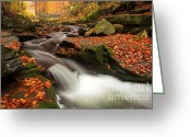 Scenery Greeting Cards - Fall Power Greeting Card by Evgeni Dinev