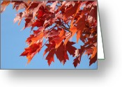 Red Leaves Greeting Cards - Fall Red Orange Leaves Blue Sky Baslee Troutman Greeting Card by Baslee Troutman Fine Art Photography