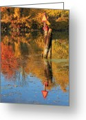 Erie Barge Canal Greeting Cards - Fall Reflections Greeting Card by Heather Maitland-Schmidt