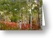 October Greeting Cards - Fall Splender 47 Greeting Card by Mark Smith