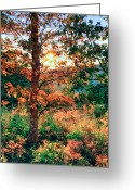 Trees Oil Greeting Cards - Fall Splendor II Greeting Card by Dan Carmichael