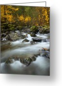 Flow Greeting Cards - Fall Surge Greeting Card by Mike  Dawson