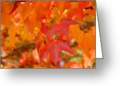 Red Autumn Trees Greeting Cards - Fall Tree Leaves art prints Orange Red Autumn Greeting Card by Baslee Troutman Fine Art Prints