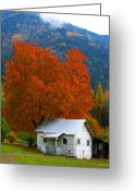 Shed Digital Art Greeting Cards - Fall tree white shed. Greeting Card by Bill Linn