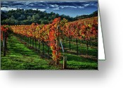 Grapevines Greeting Cards - Fall Vineyard Greeting Card by Tracy Thomas