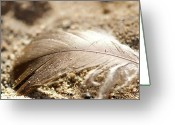 Beige Wall Art Greeting Cards - Fallen Feather Greeting Card by Lisa Knechtel
