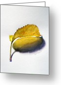 Fallen Leaf Greeting Cards - Fallen Leaf Greeting Card by Irina Sztukowski